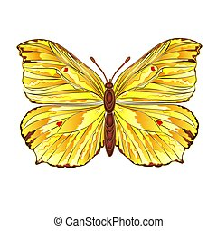 Butterfly Gonepteryx rhamni beautiful Yellow butterfly...