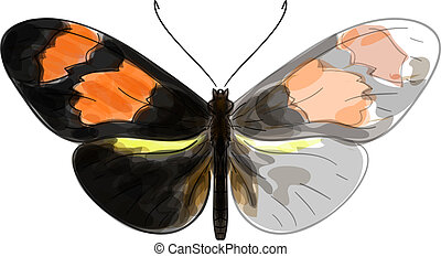 Butterfly Heliconius. Unfinished Watercolor drawing imitation.