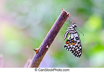 Butterfly hold on branch