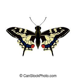 Butterfly icon. Insect design. Vector graphic