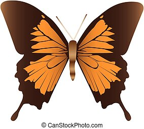 butterfly., illustration