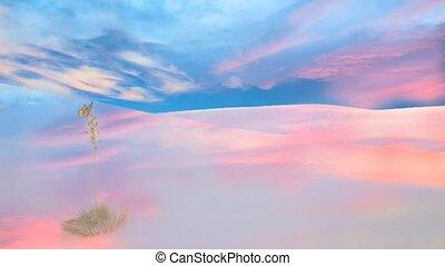 Butterfly in Fairy tale desert. Soft pastel colors
