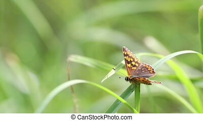 Butterfly in grass