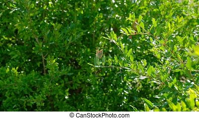 butterfly in orchard on green tree branch