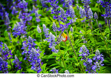 Butterfly in the flower fields