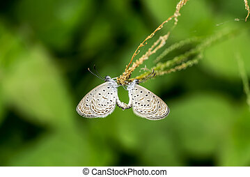butterfly in the garden.