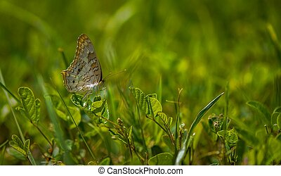 Butterfly in the grass.