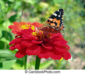 butterfly in the spring garden