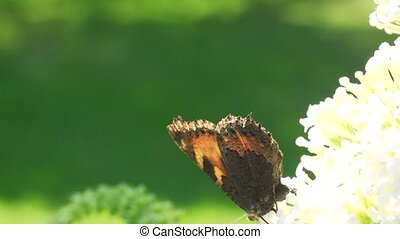 Butterfly in the summer sun