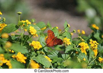 Butterfly in the Sun