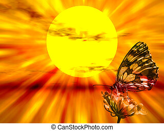 Butterfly in the sunset