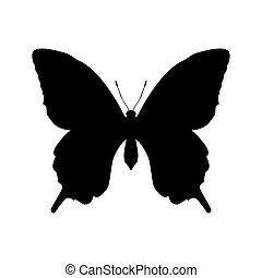 Butterfly insect black silhouette animal