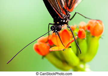 Butterfly Insect Feeding