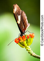 Butterfly Insect Feeding Vertical