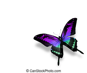 Butterfly , isolated on white background