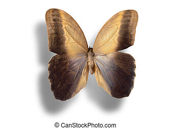 Butterfly isolated on white. - Butterfly (Caligo memnon) ...