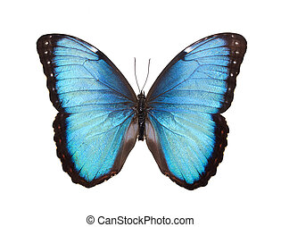 Butterfly Isolated on White - Blue Butterfly Isolated on...