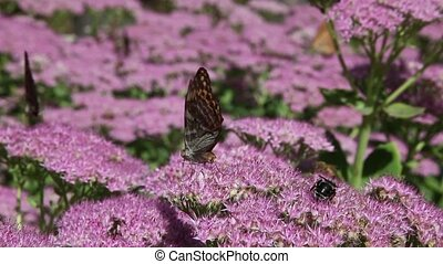 Butterfly lands on flowers