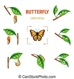 Butterfly life circle insect transformation larva on leaf