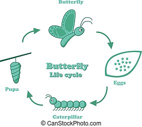 Butterfly life cycle in monochrome style, vector