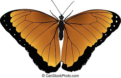 Butterfly light red vector