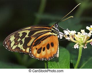 butterfly macro #5