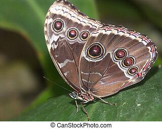 butterfly macro #6