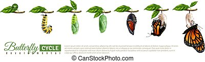 Butterfly Metamorphosis Horizontal Set - Butterfly...