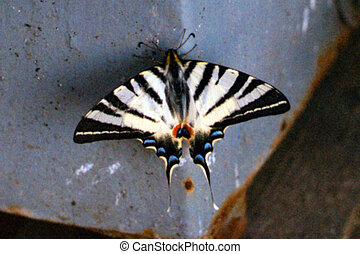 butterfly - micro-world, insect, protozoa organisms, small...
