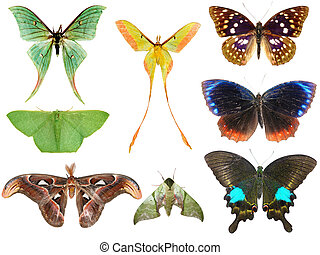 butterfly moth collection set isolated in white background