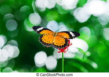 Butterfly nectar.