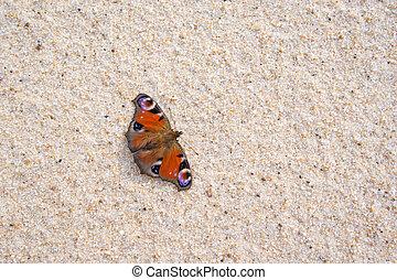 butterfly on a beach