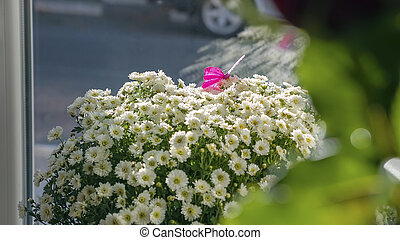 Butterfly on a beautiful bouquet of daisies