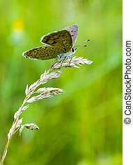 butterfly on a blade of grass