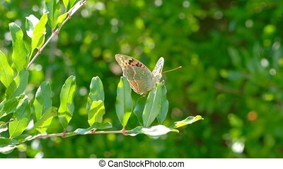Butterfly on a branch.