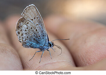 butterfly on a finger closeup