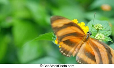 Butterfly on a flower eating nectar.