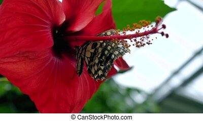 Butterfly on a flower eating nectar