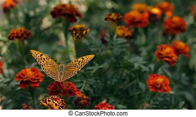 Butterfly on a flower fly away