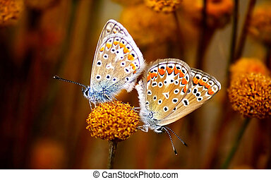 Butterfly on a flower in autumn
