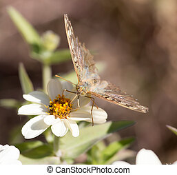 butterfly on a flower in nature
