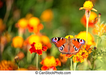 Butterfly on a flower in the wild
