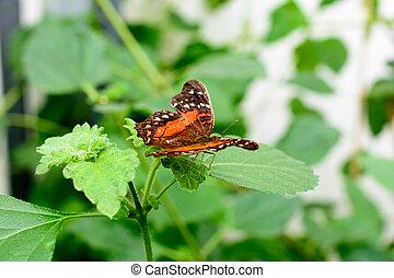 butterfly on a flower - macro image - Beautiful butterfly on...