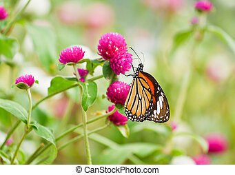 Butterfly on a flower.