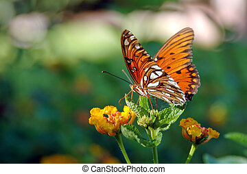 Butterfly on a Lantana Plant - A beautiful butterfly sits...