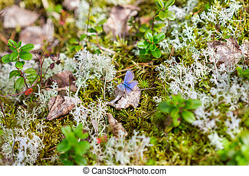 Butterfly on a moss in forest