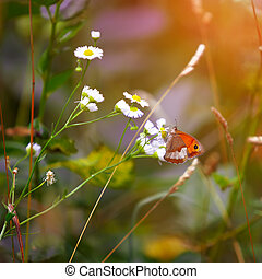 Butterfly on a spring meadow in the sunshine.