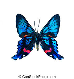 Butterfly on a white background in high definition