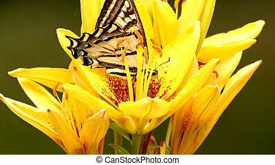 Butterfly on a yellow flower green background