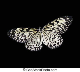 butterfly on black - A black and white butterfly on a black...
